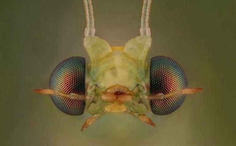بالصور.. مواطن يتحدى خوفه من الحشرات بطريقة غريبة - صحيفة ...